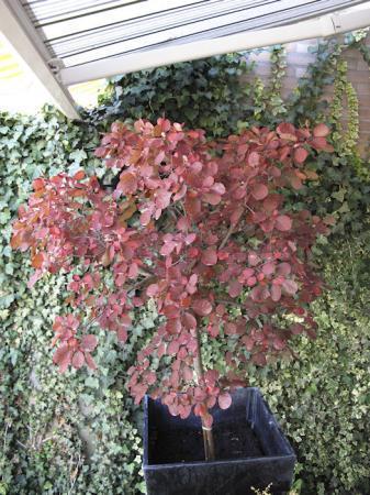 Vaste Planten Identificatie a.u.b 1