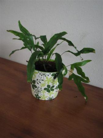 zuurstofrijke planten