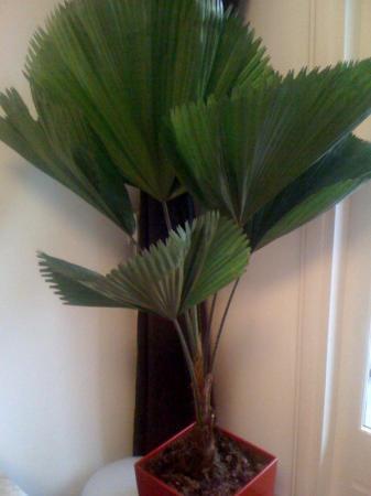 Welke plant en wat te doen tegen bruine vlekken?