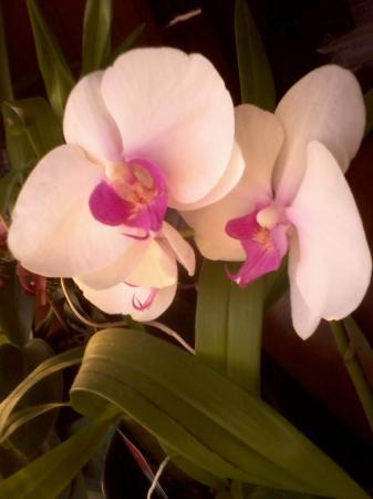 foto's orchidee