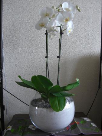 Kan dit eigenlijk goed zijn voor een orchidee?