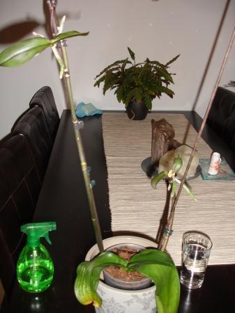 deze phalaenopsis en ik hebben hulp nodig