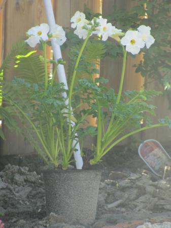 Welke bloeiplant is dit?