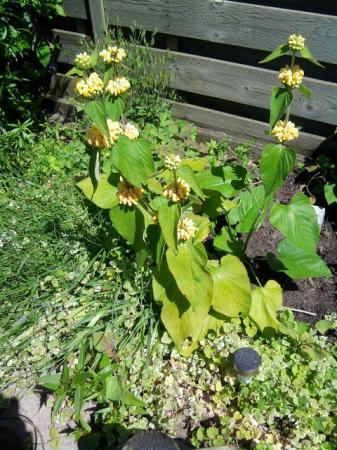 Plantsoort