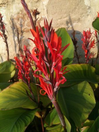 Welke plant/bloem is dit?