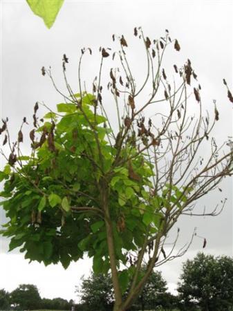 Wie weet welke boom dit is?