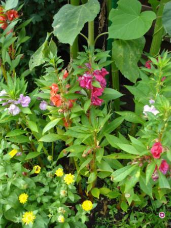prachtige bloem waarvan ik de naam wil weten