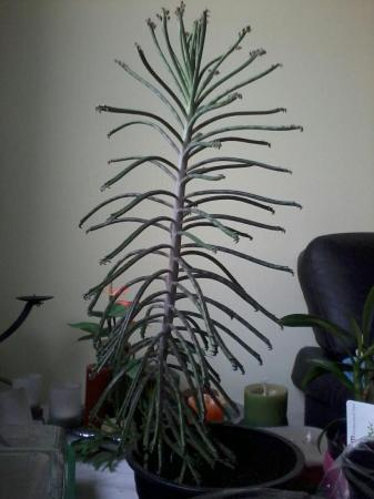 Welke plant is dit???