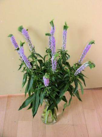 Bloemen geschenk