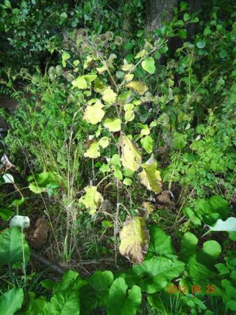 Plantje in Hessen