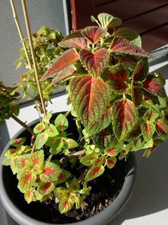 Wie weet welke plant dit is?