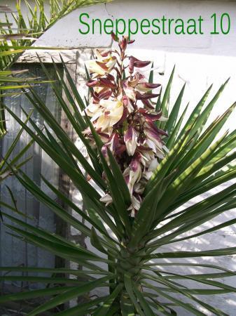 Overwinteren van deze plant