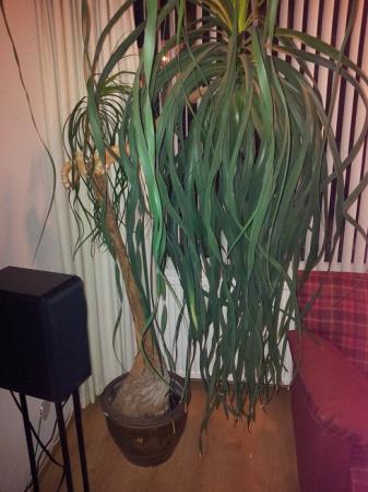 Welke (sub-tropische) plant is dit ?