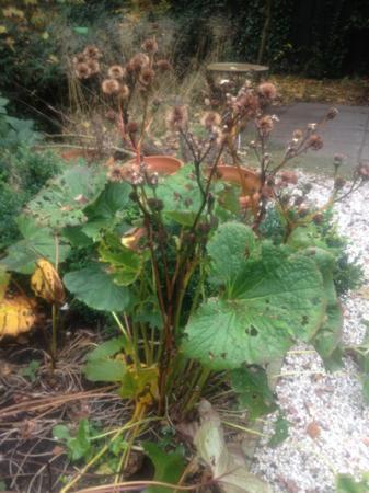 Onbekende plant 1