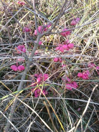 determineren plant/struik