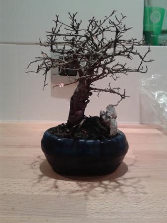 regen en bonsai