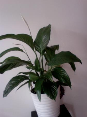 Watvoor plant is dit en hoe moet ik deze verzorgen