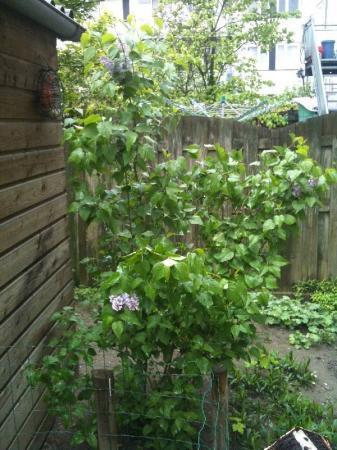 Identificatie boom/struik en verzorging