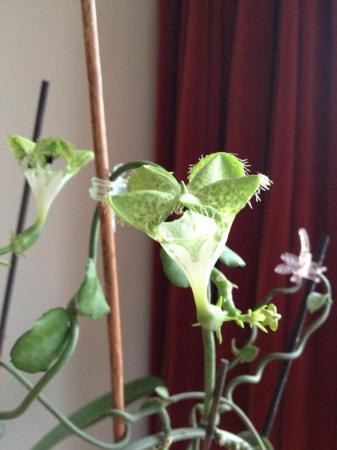 Op zoek naar de naam en info over deze plant