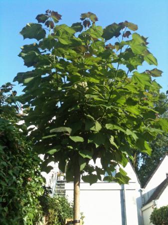 Twijfel welke boom dit is