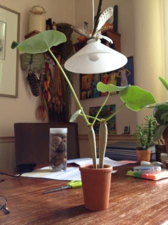 Onbekende (vet?) plant