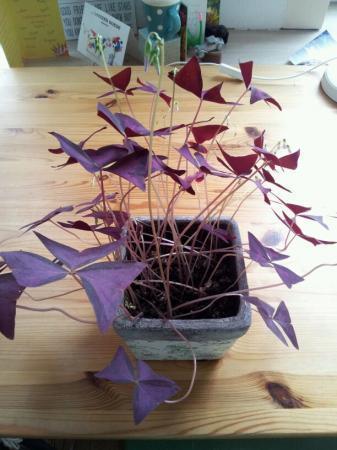 Op zoek naar naam paarse plant