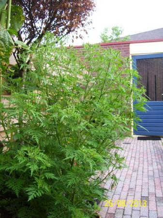 Wie kan ons helpen met de naam van deze plant?