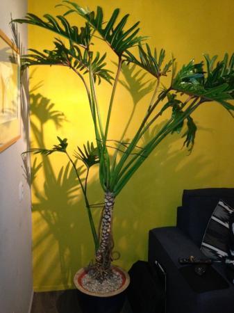 Welke plant / palm is dit?