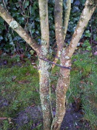 aanslag op diverse boompjes