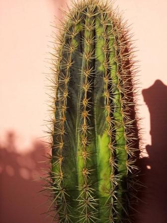 HELP mijn cactus word zwart en slap!