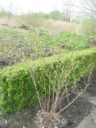 id planten niewe tuin