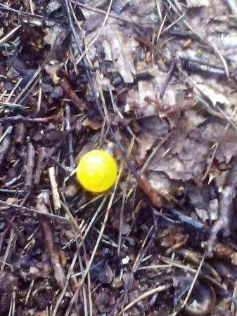 Geel bolletje van wesp?