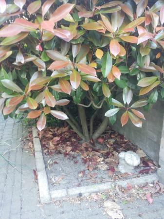 Weet iemand welke plant dit is