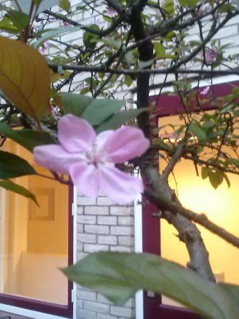 plant met roze bloemen