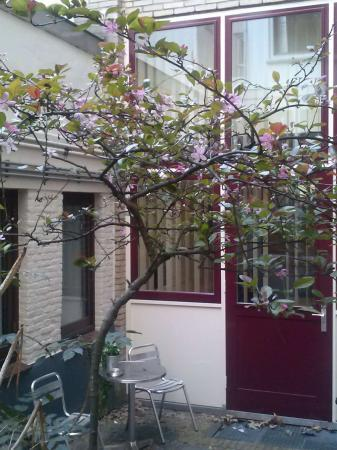plant met roze bloeiende bloemen