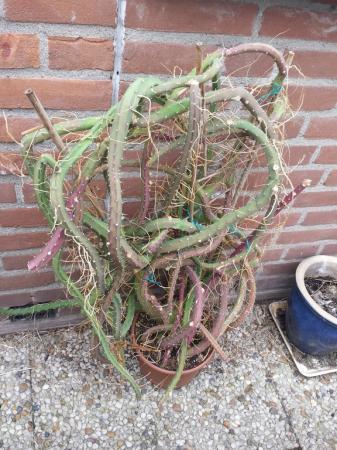 bizarre cactus