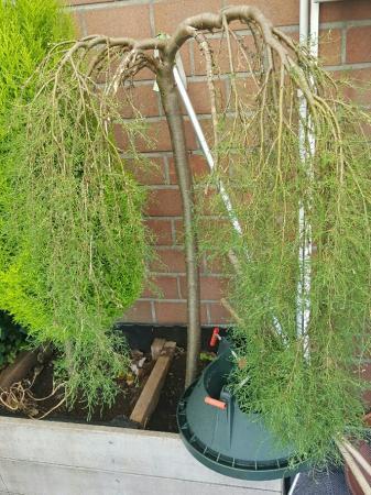 Welke struik en plant zijn dit ?
