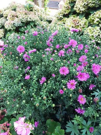 Tuin/perk plantje, wat is de naam