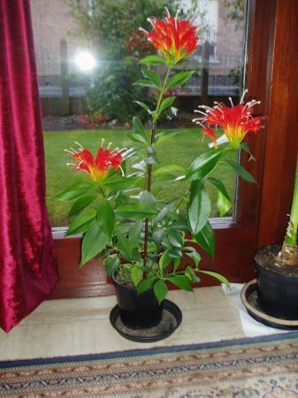 naam bloem