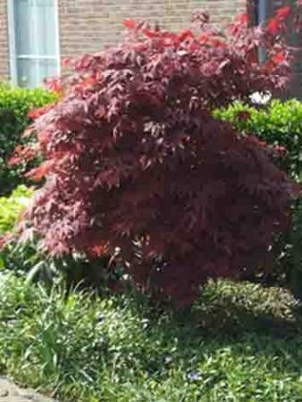 Wat is de naam van dit boompje?