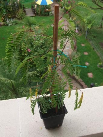 planten naam gezocht