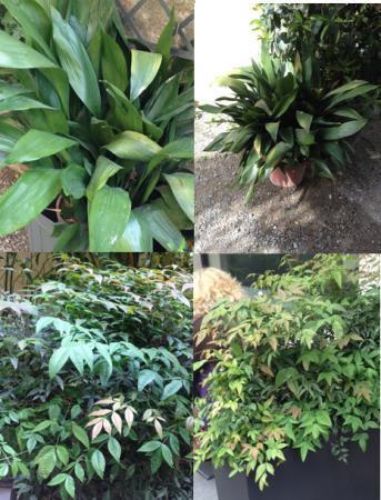 Wie kent deze planten uit Milaan/Italie..?