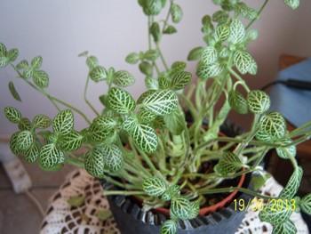 hoe heet dit plantje