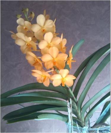 Orchideeënkwekerij bezocht