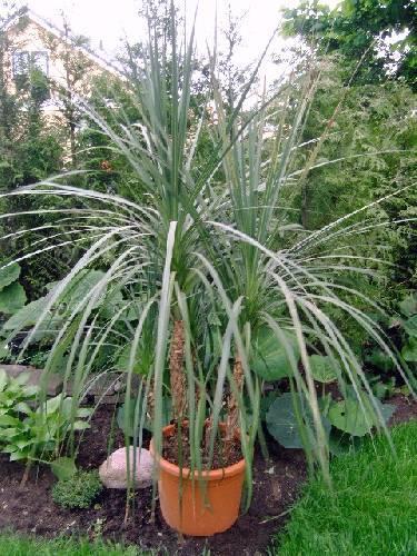 wat voor plant is dit???