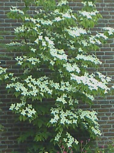 weet iemand de naam van deze plant ?