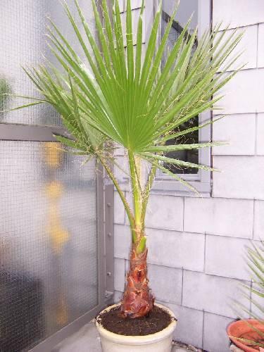 Welke palm?