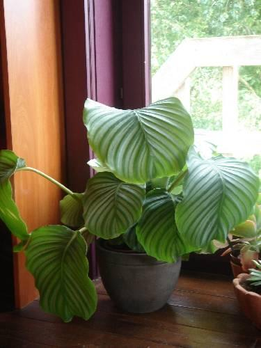 Welke planten zijn dit?