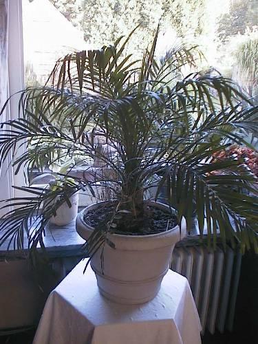 Welke planten ?