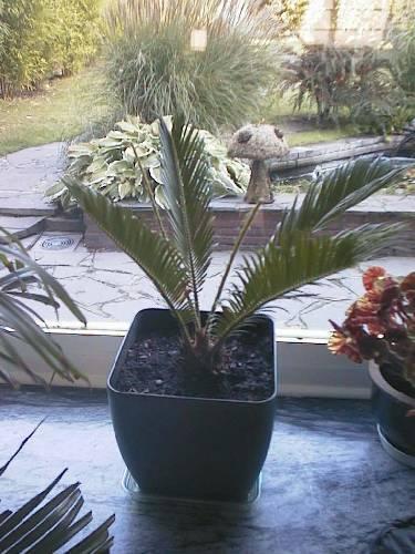 Welke planten
